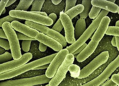 サルモネラ菌に感染した時の症状。卵を食べちゃイケナイ?