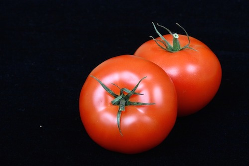 トマトの育て方は支柱の立て方が大事。プランターで病気にならない肥料やり