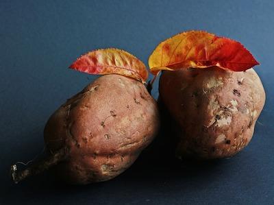 サツマイモの上手な植え方を動画で解説。プランターでの育て方