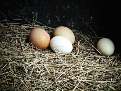 サルモネア卵