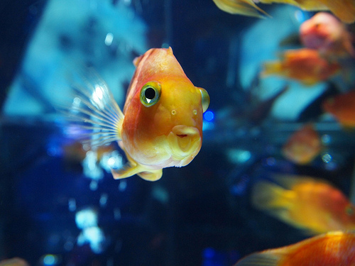 金魚が病気時は塩浴?目の飛び出し,赤や白い点々の症状は…