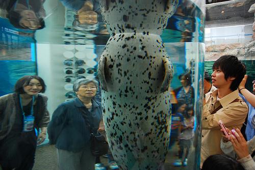 京都水族館が混雑する日と時間帯!状況知る。年末年始どう?