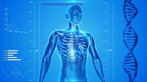 肋骨の画像