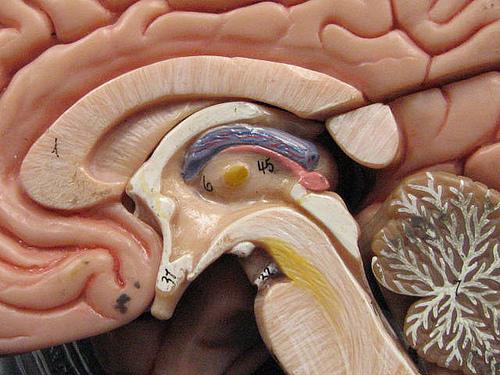 低酸素脳症の症状と治療。後遺症は出るのか?原因は呼吸と関係が?