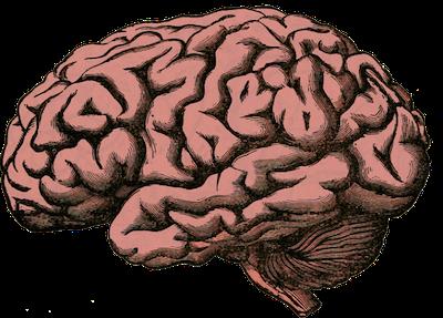 リアルな脳