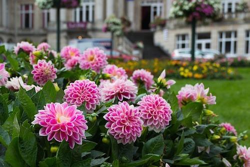 クレアチニンと花