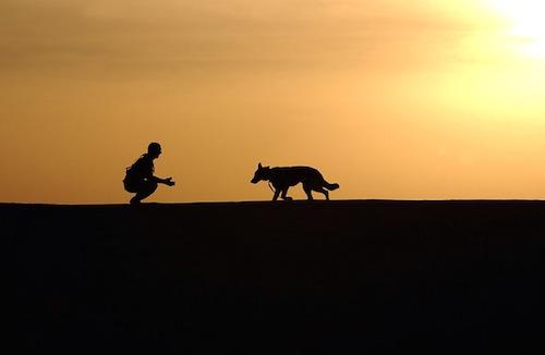 ライム病の検査と治療法。犬にも発生する病原体とは?