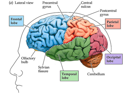 レビー小体型認知症の治療薬は?診断されたら?初期症状と原因。