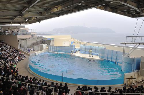 新江ノ島水族館 割引チケットある?デートプランおすすめランチ
