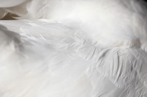 羽毛布団は干すの?頻度と時間で上手な干し方とは