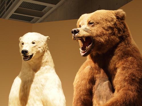 熊危険!出没する時期と時間帯いつ?行動に出るタイミングを知る。