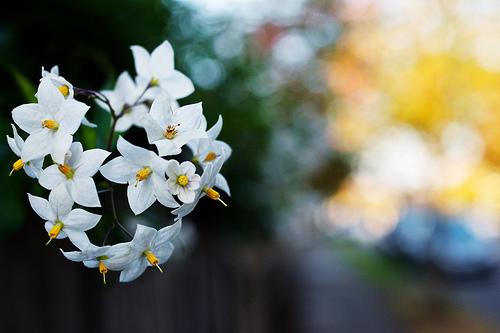 秋に咲く花木が魅力的な理由。園芸を楽しむ方法とは。