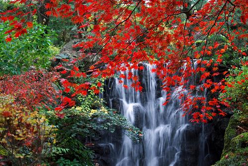 箱根の紅葉が綺麗な見ごろ時期は?例年渋滞?オススメ穴場スポット