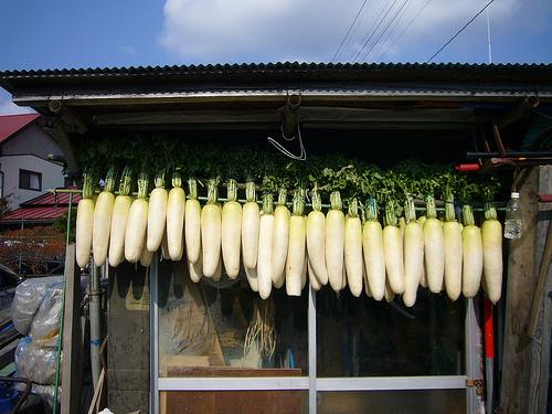 大根の葉は冷凍保存がイイ?乾燥でもOK?大根の葉にどんな栄養が?