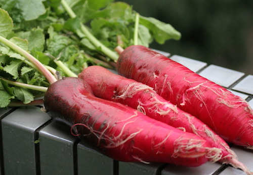 赤大根のスゴい栄養!食べ方と健康レシピ。