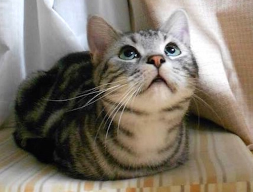 猫はなぜ香箱座り?リラックスする?語源と読み方。犬もかわいい?