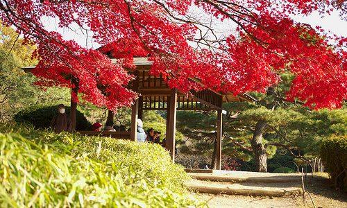 新宿御苑の紅葉 見頃の時期とブログで情報を集めてみる。