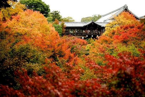 京都 東福寺の紅葉がスゴい!ライトアップで見たい!混雑状況は?