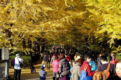 昭和記念公園 紅葉の見頃はいつ?駐車場は混雑する?ブログ見たい