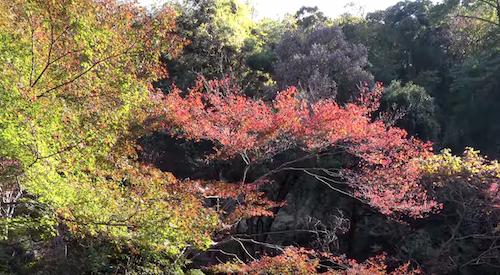 箕面の滝紅葉