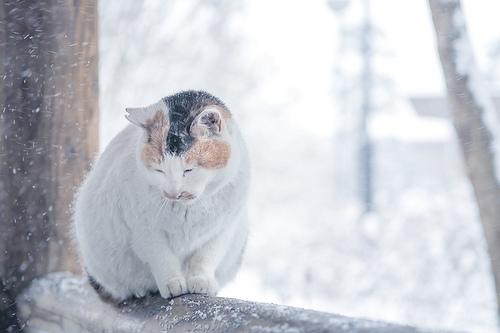 冬のあったかアイテムグッズ!おすすめをご紹介します!