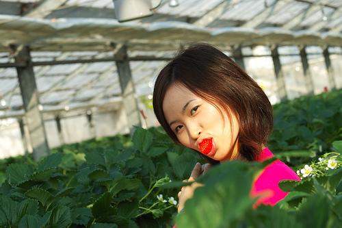 秩父の美味しいイチゴ狩り!人気のあるおすすめの農園をご紹介
