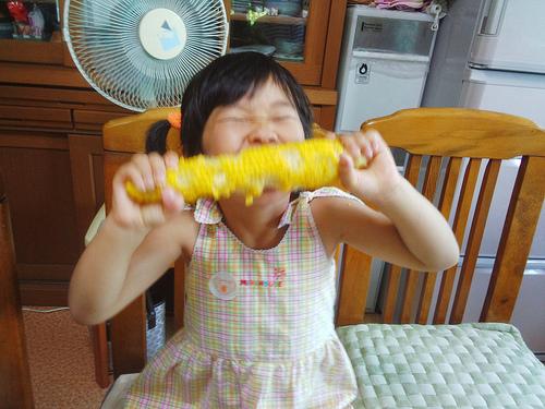 北海道のとうもろこし 収穫時期はいつ?美味しい季節に通販で食べる!