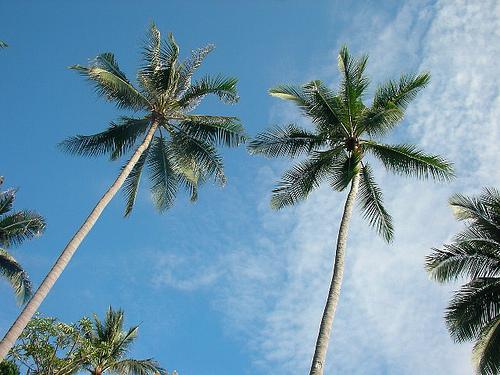 稲毛海浜公園プール 場所取りは子供に日陰を!!人気のスライダーを楽しむ方法