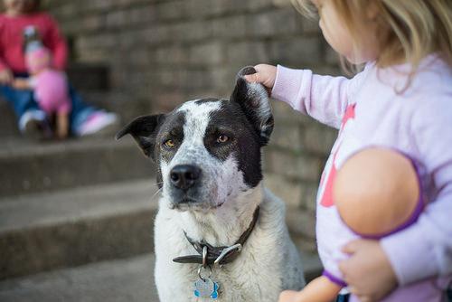 子供が犬に読み聞かせるREADプログラムのスゴい効果とは。