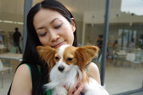 アニマルセラピー 効果は猫と犬で違う!?どんな資格どんな症状に効く?
