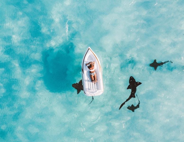 ドチザメかわいい!生態知りたい!釣りして飼育できる?どんな餌?料理して食用になる?