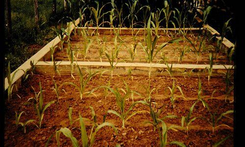 米ぬか 肥料で使いたい!作り方と利用法を解説!虫がわいたらどうする?